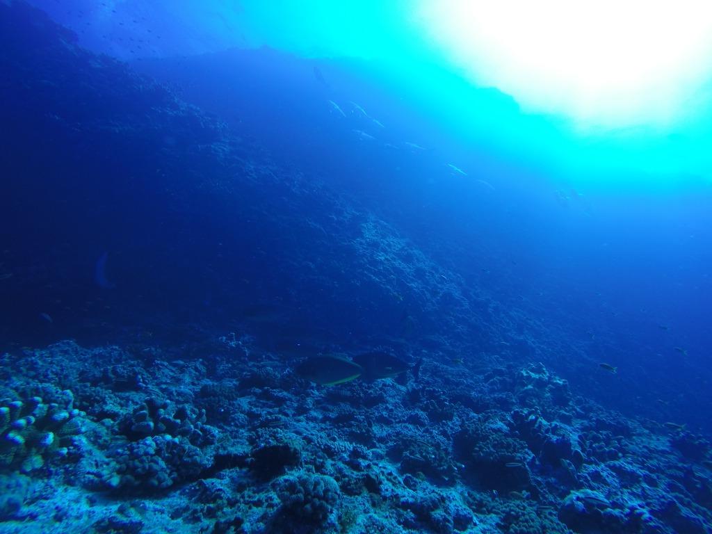 粟国島の海