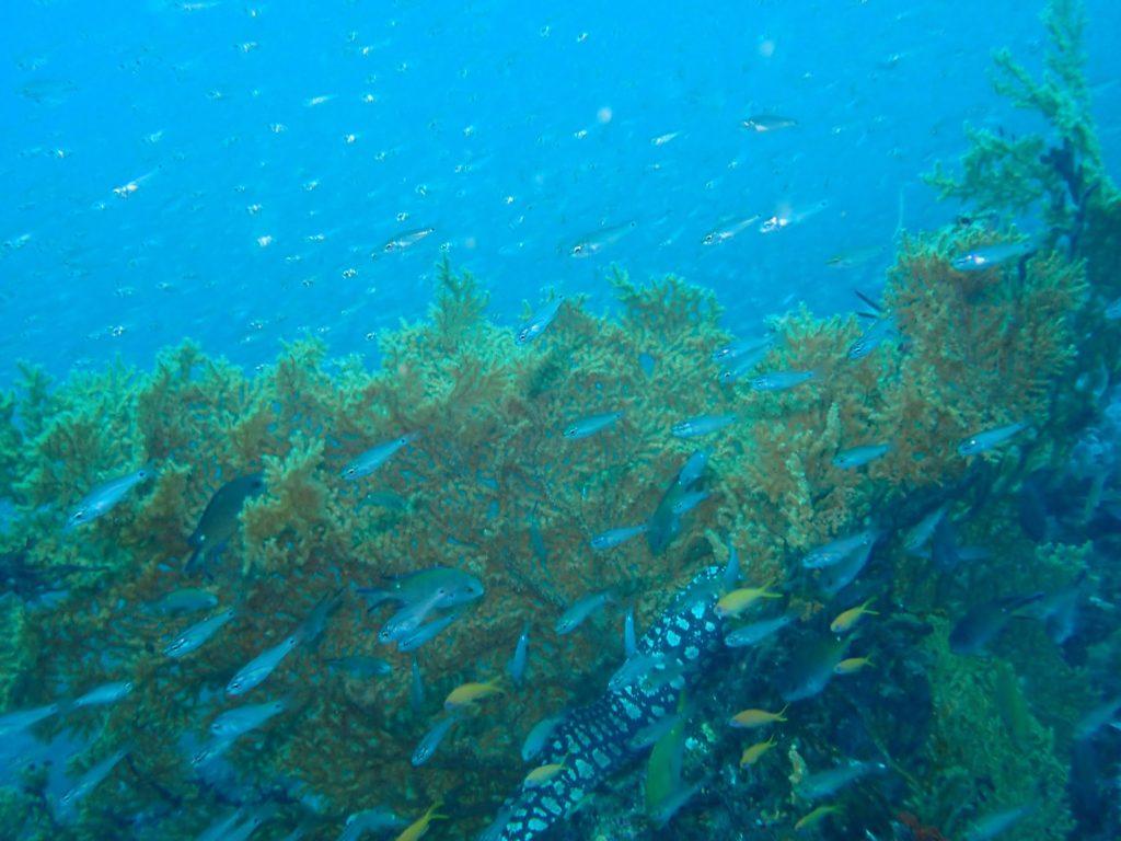 魚群の写真